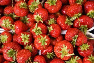 果物こそ人間にとって完全な食べ物