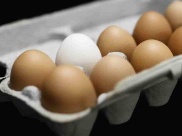 血清アルブミン不足は新型栄養失調
